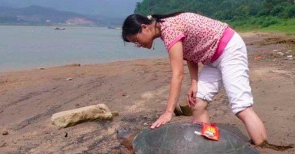 不可思議的'托夢報恩'竟真的發生了!一名女子十幾年前幫助過一隻烏龜,而如今這隻烏龜入夢告訴她,之後竟...看得我雞毛疙瘩都起來了!