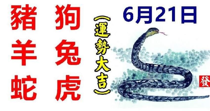 6月21日生肖運勢_豬、狗、羊大吉